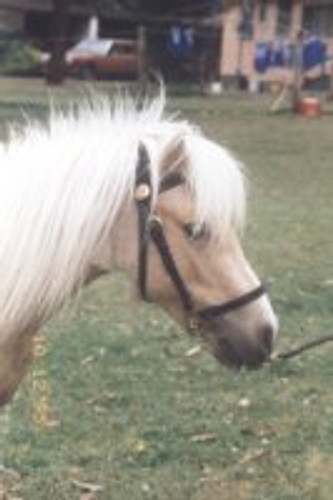 Miniature / Small Pony Lead-in Bridle