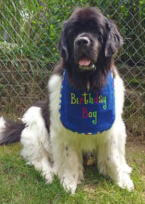 henry-birthday-2015.jpg