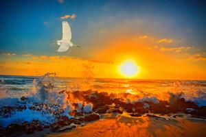 Sunrise Happiness