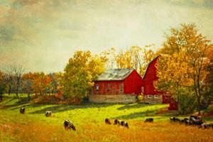 Red Barn Sunday