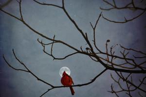 Full Moon Cardinal