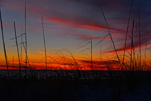 Beach Grass Sunset