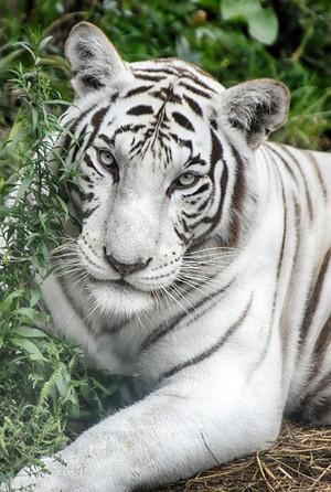White Beautiful