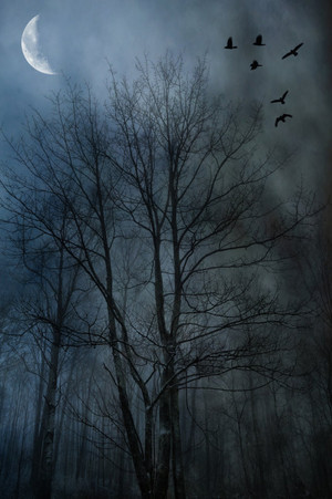 Foggy Crows