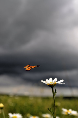 Stormy Landing