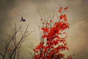 Blue Jay Fall
