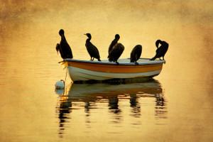 Cormorant Float