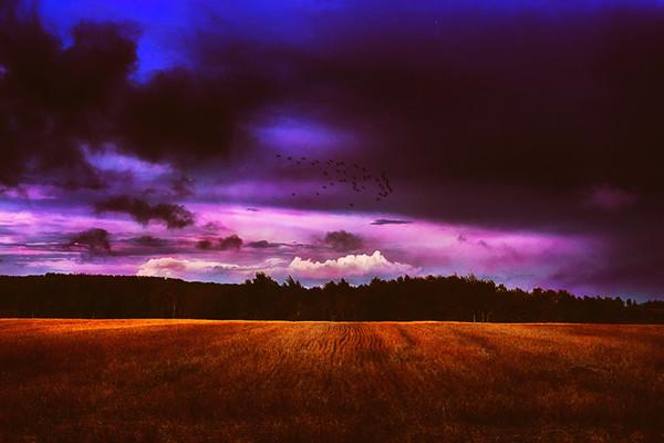 Purple Storming