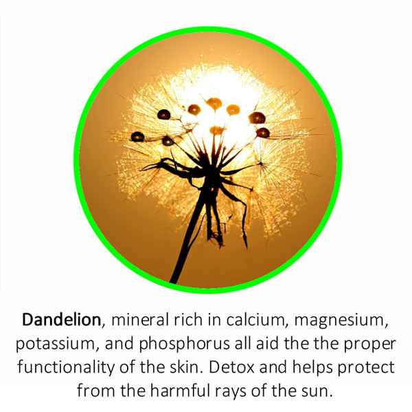 Dandelion, mineral rich in calcium, magnesium,potassium, and phosphorus all aid the the proper functionality of the skin. Detox and helps protect from the harmful rays of the sun.