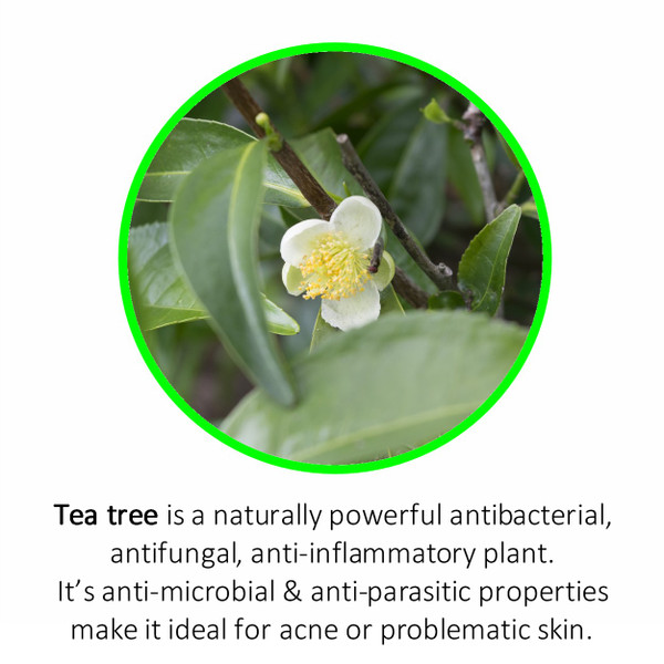 Tea tree is a naturally powerful antibacterial, antifungal, anti-inflammatory plant.It's anti-microbial & anti-parasitic properties make it ideal for acne or problematic skin.