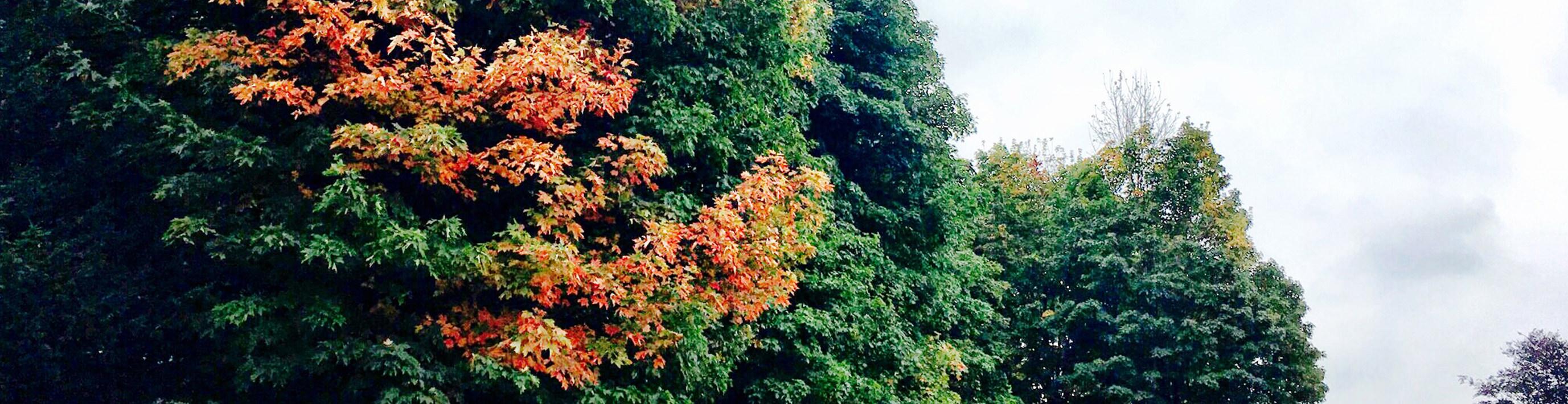 autumnbanner.jpg