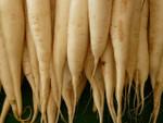 Daikon Radish Seeds QTY. 200