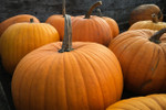 Big Max Pumpkin Seeds QTY. 20