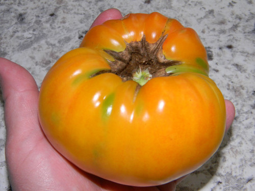 Hillbilly Tomato Seeds QTY. 25  (Indeterminate)