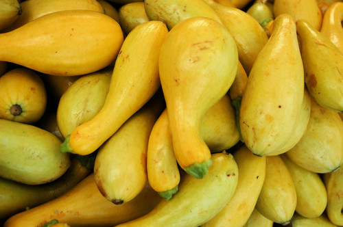 Yellow Crookneck Squash Seeds QTY. 50