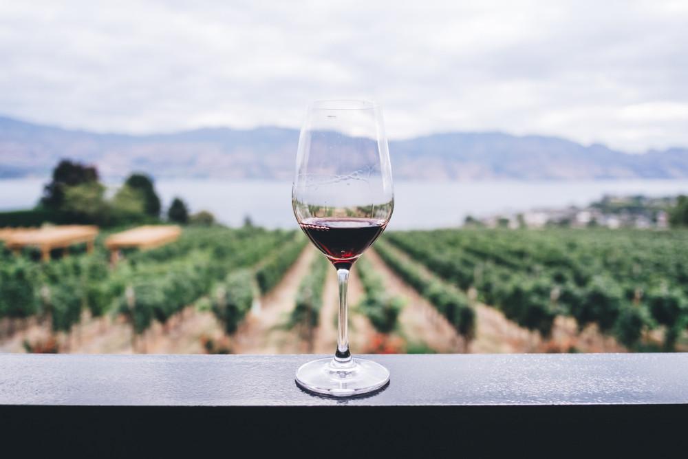Pinot Noir 101