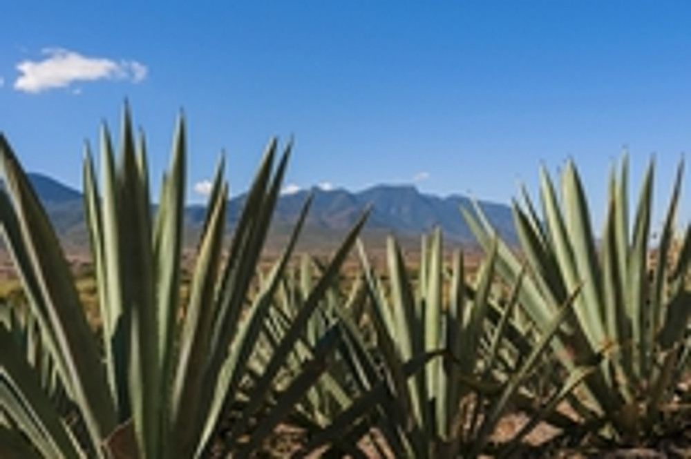 A Crash Course in Mezcal (with a yummy treat at the end)