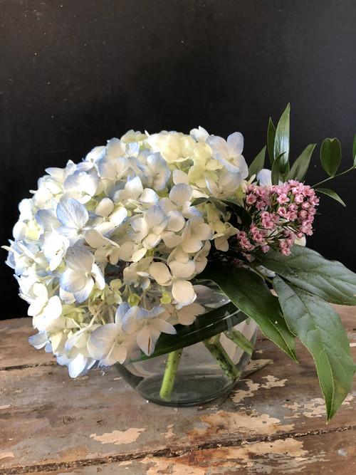 Make her Mother's Day with the lovely calming sweetness of hydrangeas in a clear glass bowl,  accented with lily grass, ruscus, salal and wax flower