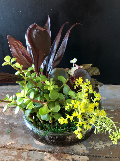 Add some cheer with a clear bowl full of varied live blooming and green plants perfect for the office, the kitchen or a sunny window.