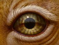 Eye 132