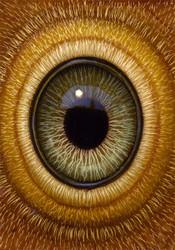 Eye 133