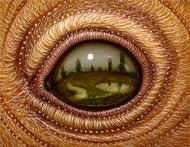 Eye 137