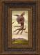 Daydreamer 04 framed