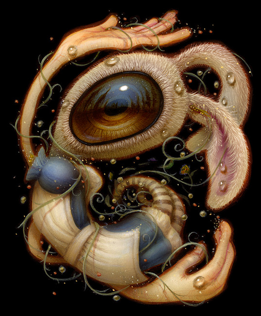 Wonder Spiral