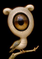 EyeBird 015