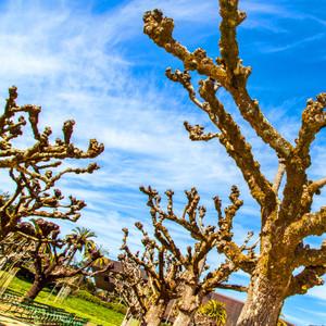 Trees // CA021