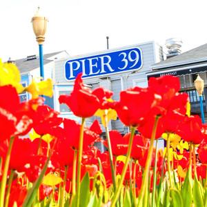 Pier 39 // CA055