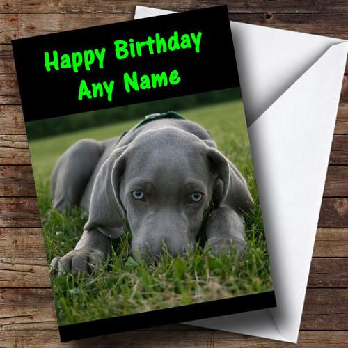 Weimaraner Dog Personalised Birthday Card The Card Zoo – Weimaraner Birthday Cards