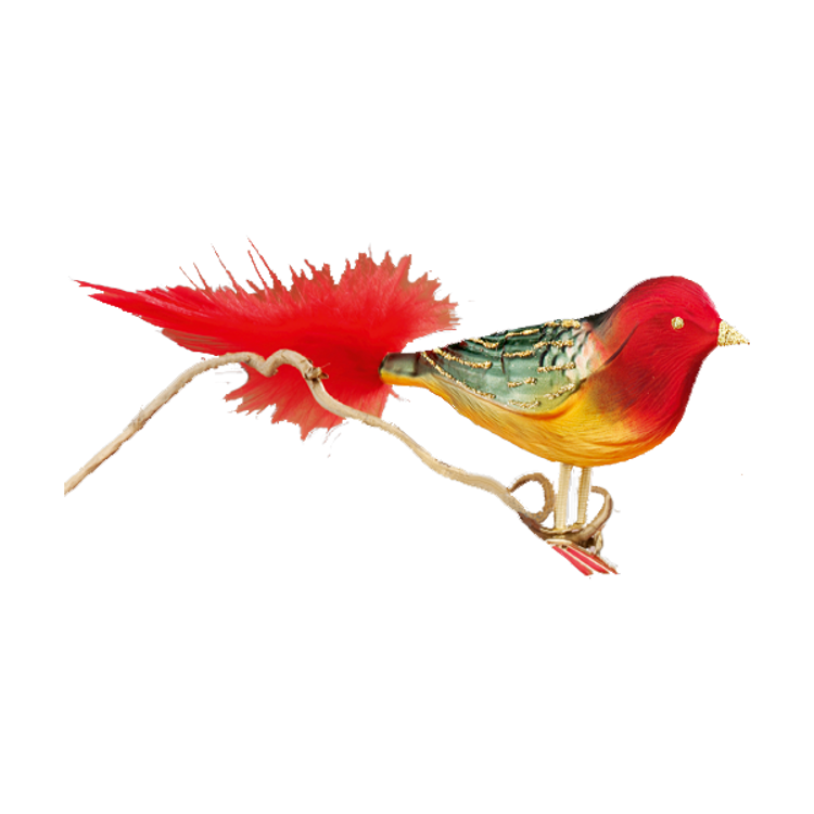 Red, Green and Yellow Bird with Red Tail
