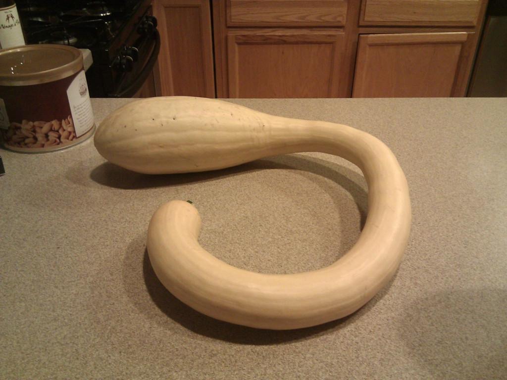 Maureen's Tromba
