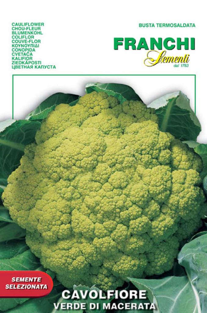Cauliflower of Macerata (30-30)