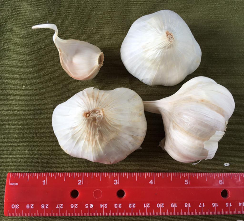 Garlic Bianco Piacenza - Certified Naturally Grown - Softneck