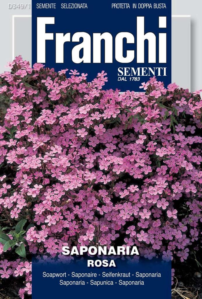 Saponaria/ Rock Soapwort (349-1)