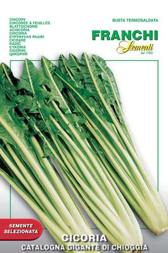 Chicory Catalogna Giant Chioggia (40-22)