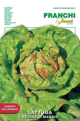 Lettuce Regina di Maggio (79-1)