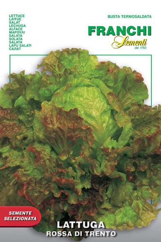 Lettuce Rossa di Trento (86-33)