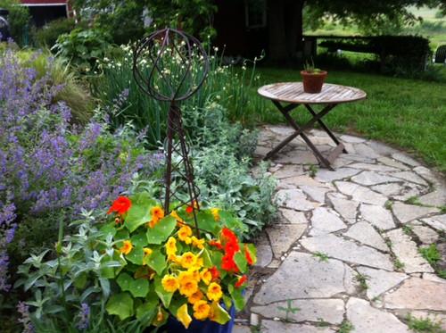 Growing in a pot, June 2013