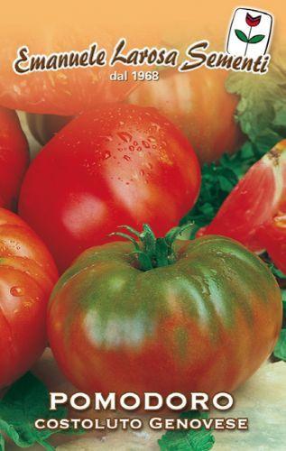 Tomato Costuluto Genovese sel Valente (106-283)
