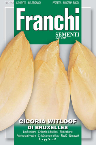 Chicory Witloof Belgian Endive (40-8)