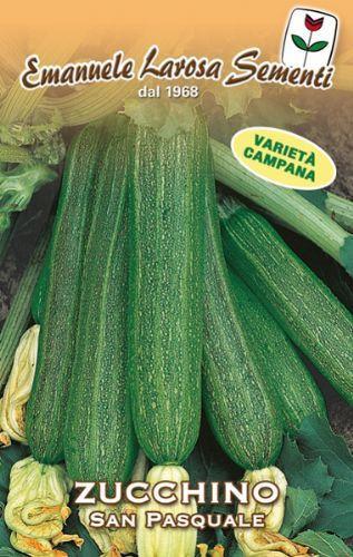 Zucchini San Pasquale -- Edible Flower (146-81)
