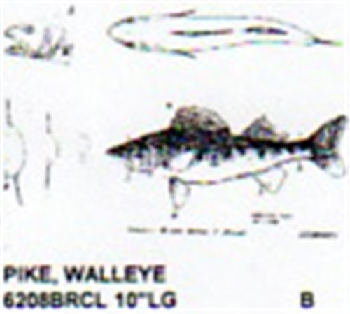 Walleye Pike Mouth Closed 10 Quot Long Color Carving Pattern