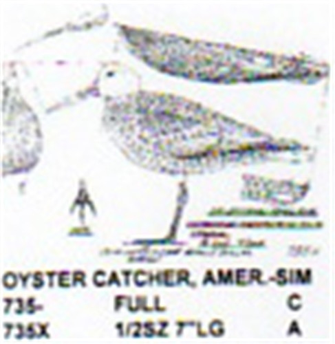 American oyster catcher standing carving pattern