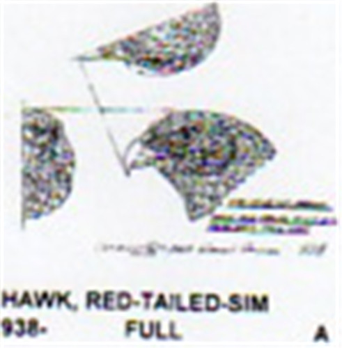 Red Tailed Hawk Head Only Carving Pattern