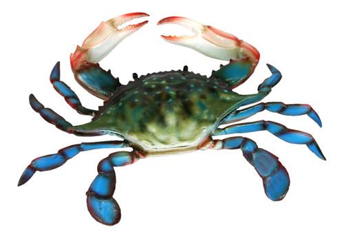 6 inch Maryland Blue Crab Beach Wall Decor Resin