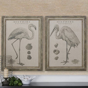 Natural History Framed Art | European Inspired Wall art