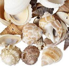 1/2 Pound Natural Seashell 4-25mm Random Mix of 300 Drops